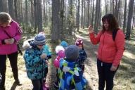 Mets kui kooslus
