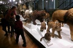 Tartu Loodusmuuseum